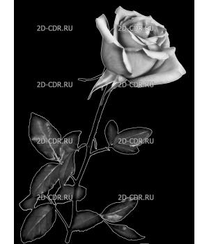 Розы (65)