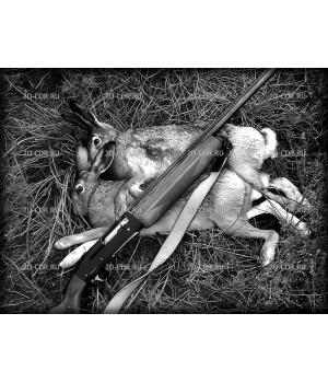 Зайцы. Охота, охотники